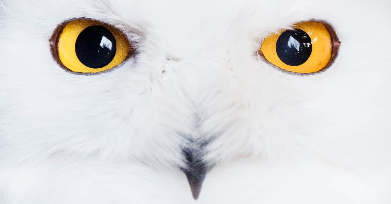 Could Staring Into a Stranger's Eyes Cure Zoom Fatigue?