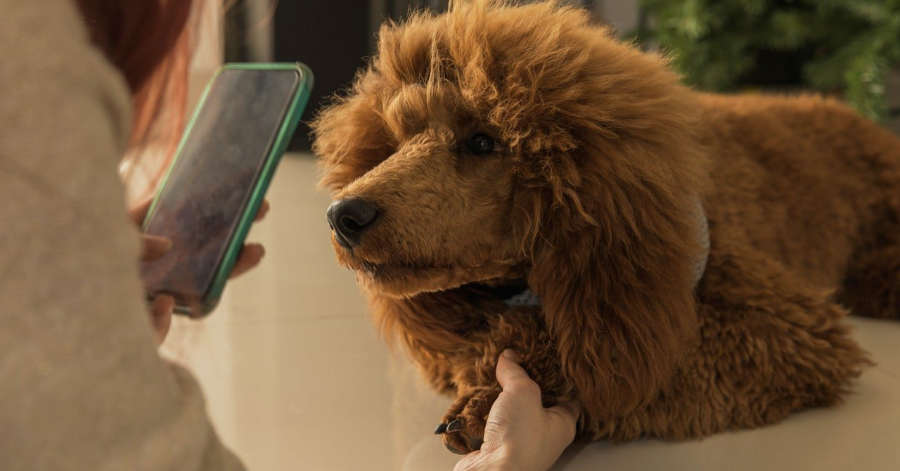 The Best Veterinary Telemedicine Services for Your Pet (2020)